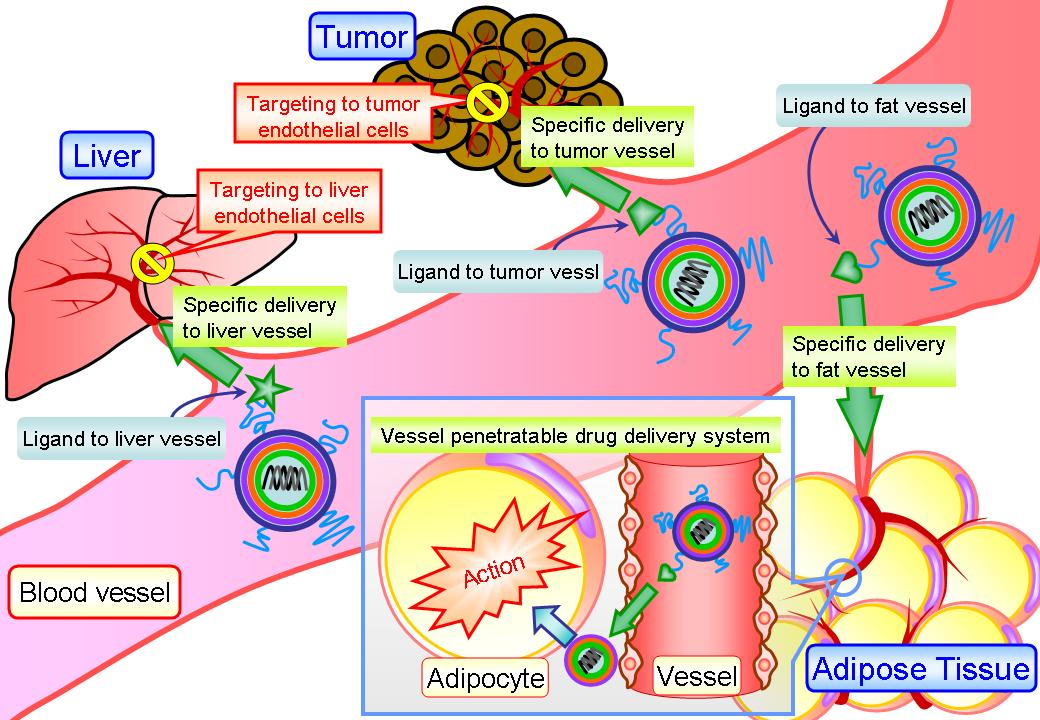 Research papers targeted drug delivery